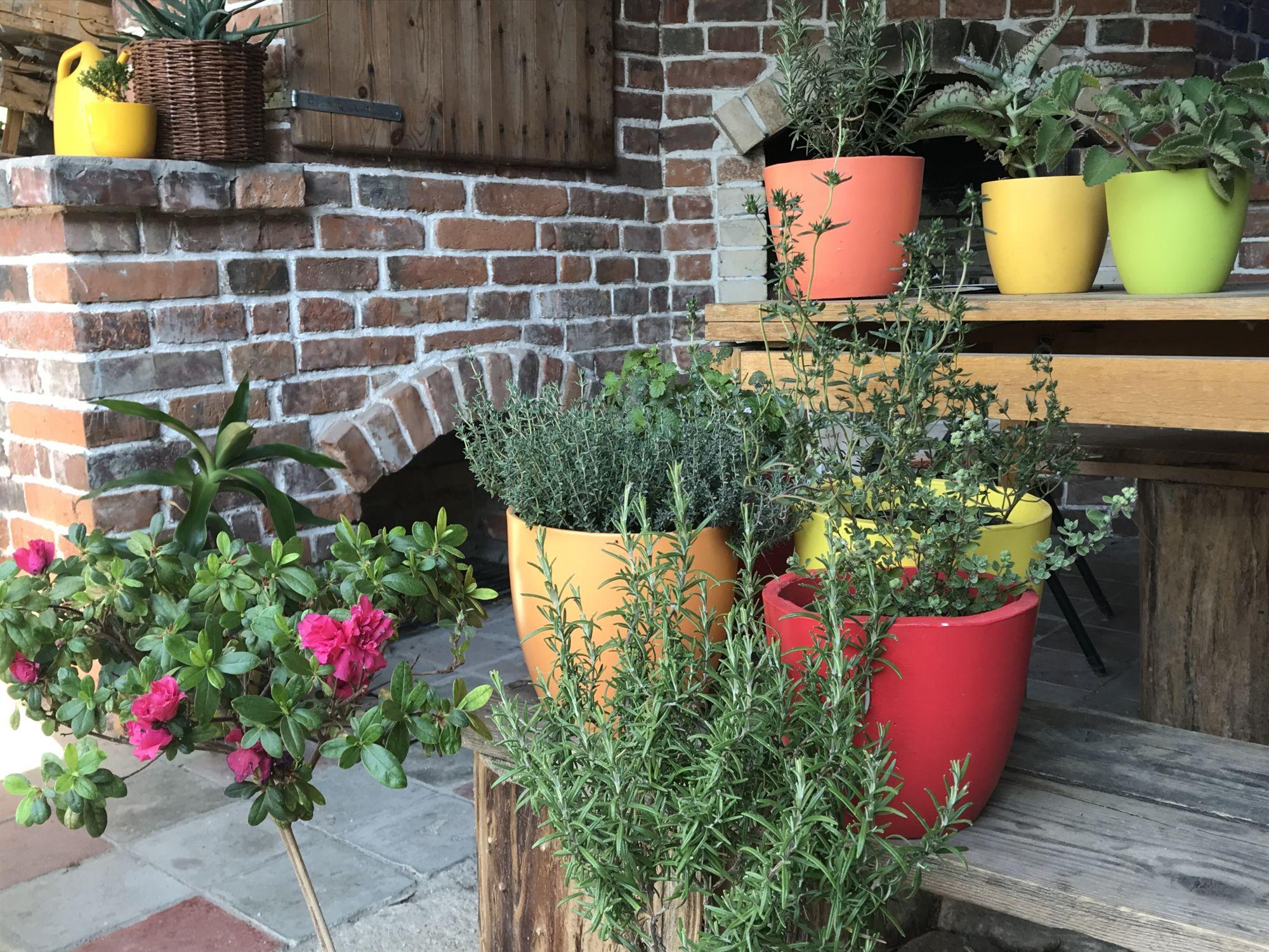 Kurz - Pěstování bylinek vnádobách